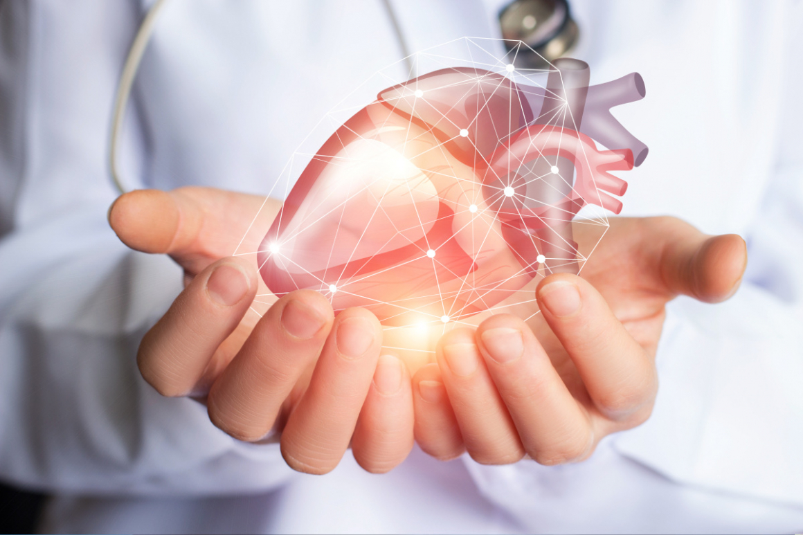 Cardiologist supports a heart